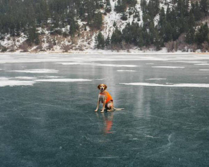 No Other Dog Is Living The Dream Quite Like This One Is (20 pics)