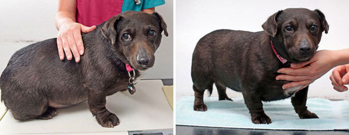 These Pets Went Through Some Impressive Body Transformations (13 pics)