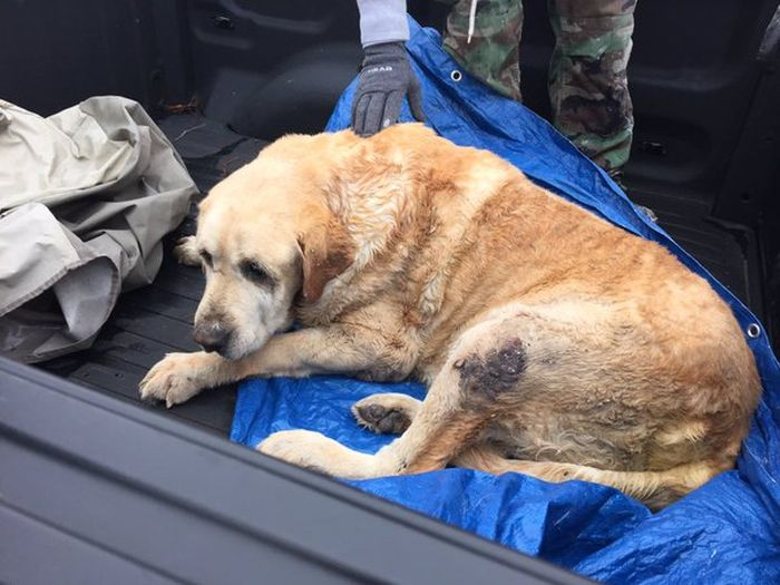 These Two Brave Dogs Survived After A Tornado Trapped Them Under A Home (5 pics)