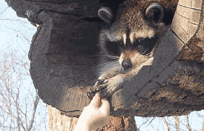 These Gifs Are A Lot Funnier When You Play Them In Reverse (16 gifs)