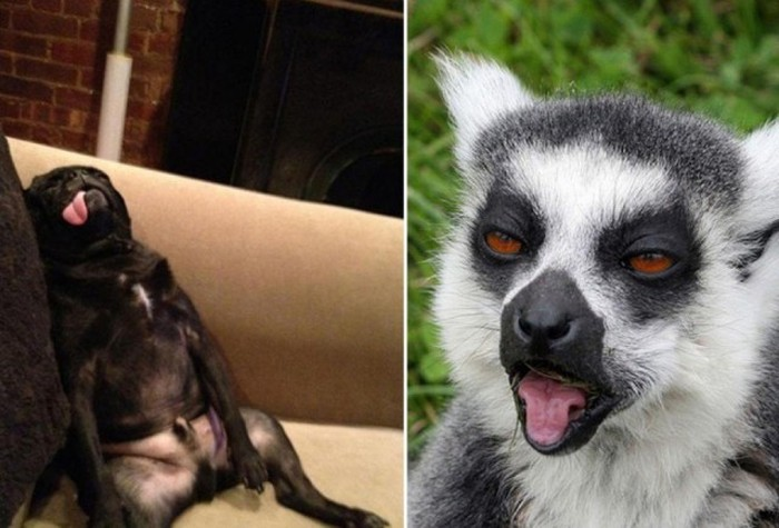 Awesome Animals That Clearly Have A Hangover (25 pics)