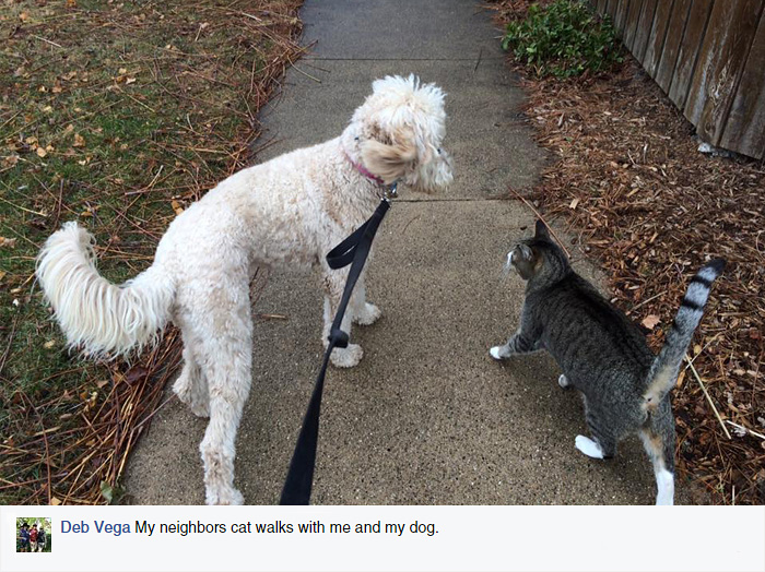 A Surprising Note Revealed That This Cat Has A Secret Family (25 pics)