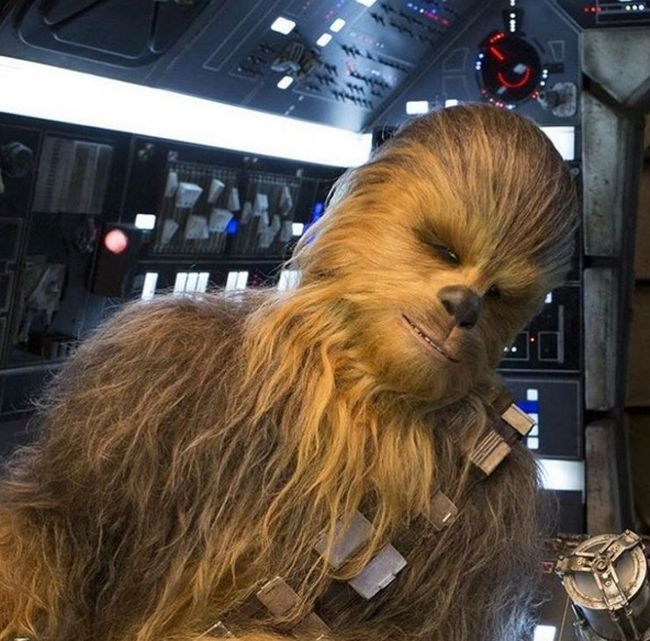 Meet Chewbacca's Double From Star Wars: The Force Awakens (4 pics)