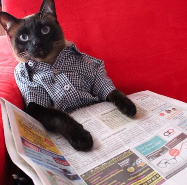 Meet Little Lenny The Cat That's Taking Instagram By Storm (15 pics)