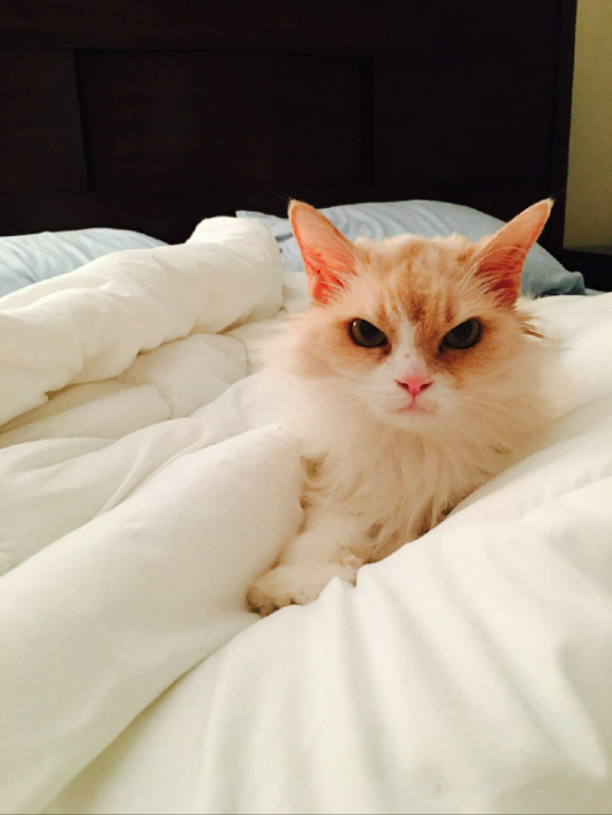 This Feline Could Give Grumpy Cat A Run For Its Money (3 pics)