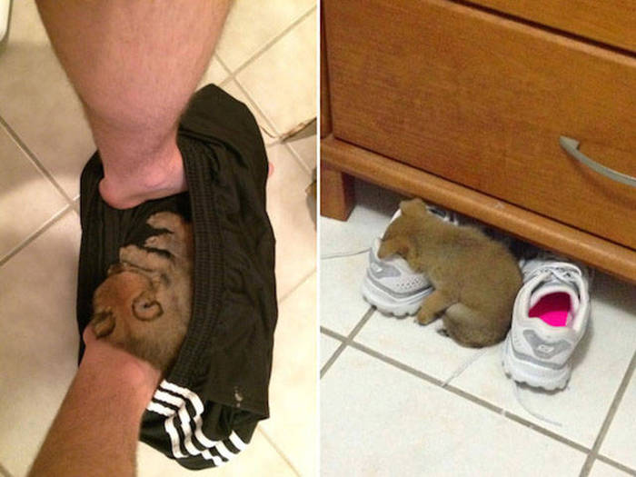 Photos That Prove Dogs Will Sleep Anywhere As Long As They Can Fit (36 pics)