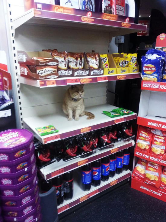 Meet The Cat That Thinks He Lives In A Supermarket (6 pics)