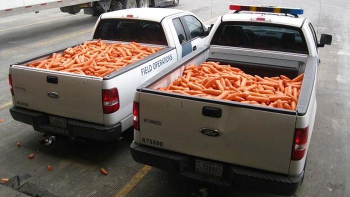 Drug Smugglers Get Busted After Trying To Disguise Marijuana As Carrots (2 pics)