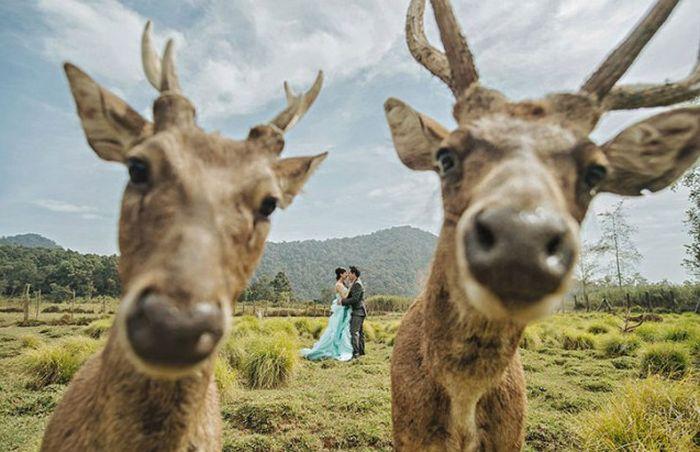 Funny Couples That Took Their Wedding Photos To The Next Level (20 pics)