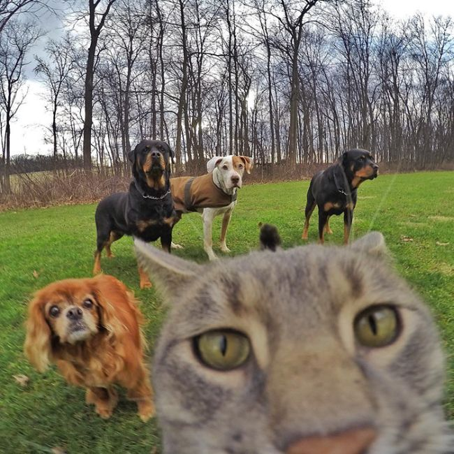 Meet The Cat That Takes Better Selfies Than Most People (8 pics)