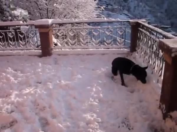 Dog Sees Snow For The First Time