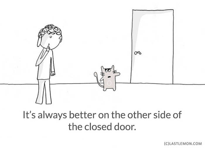 Important Life Lessons We Can All Learn From Cats (21 pics)