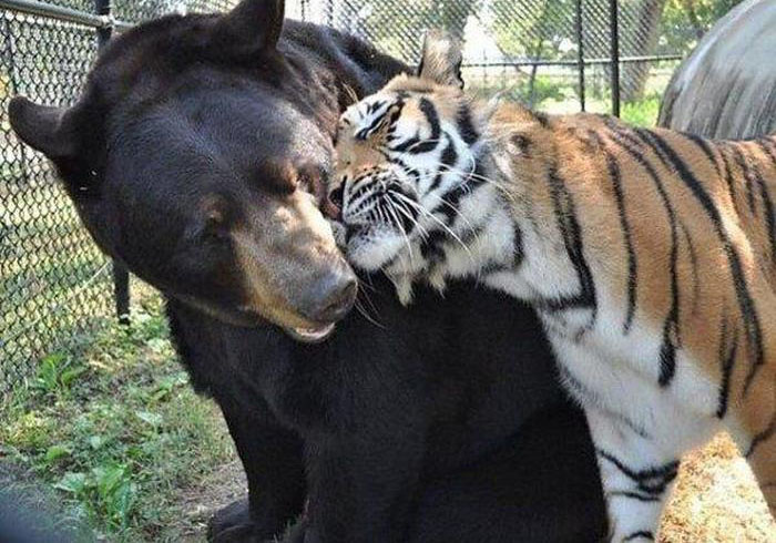 Animals That Make Better Couples Than Most Humans Do (23 pics)