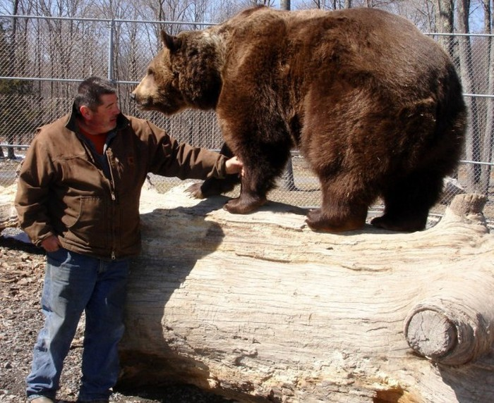 This Man Has Been Living With An Orphaned Bear For 20 Years (6 pics + video)