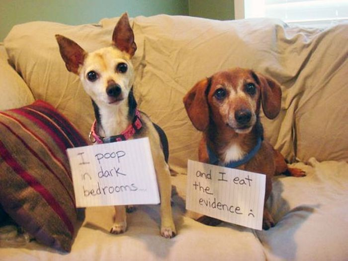 Owners Shaming Their Pets Is The Most Hilarious Punishment (20 pics)