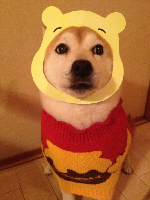 Dress Up Puppy (19 pics)