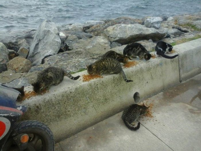 Meet The Woman Who Feeds 350 Feral Cats Everyday (3 pics + video)