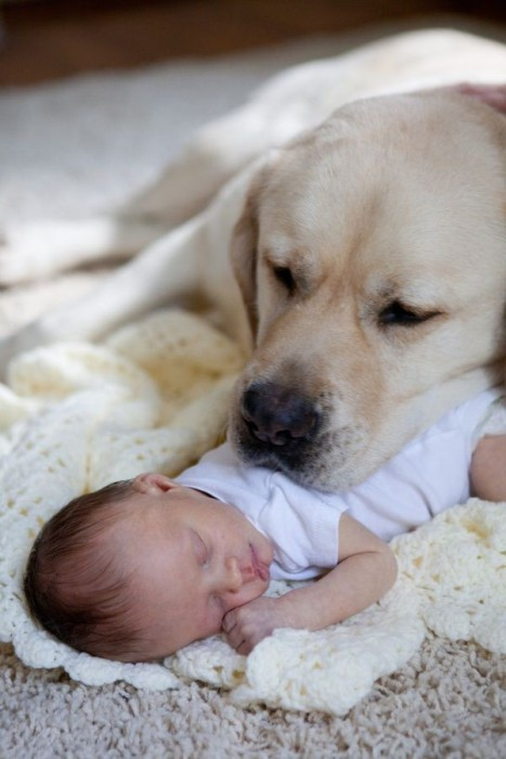 Dogs and Babies (27 pics)