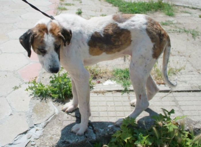 Dying Street Dog Rescued (24 pics)