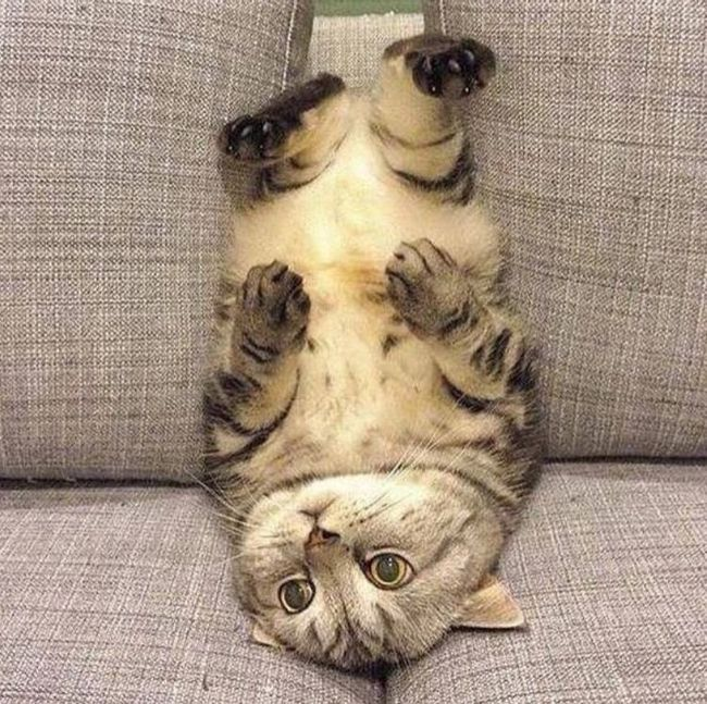 Cute Cat Bellies That Are Sure To Cheer You Up (18 pics)
