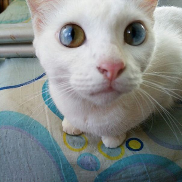 There's An Entire Universe Inside This Cat's Eyes (9 pics)