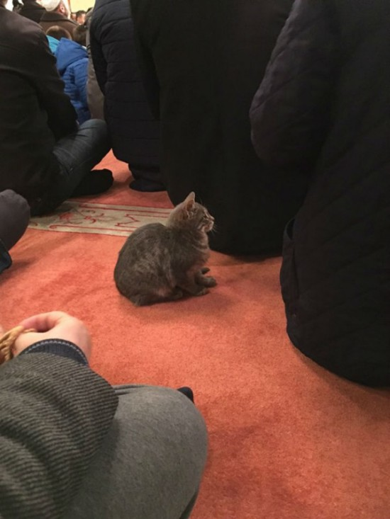 Stray Cats Love To Hang Out Inside This Turkish Mosque (9 pics)