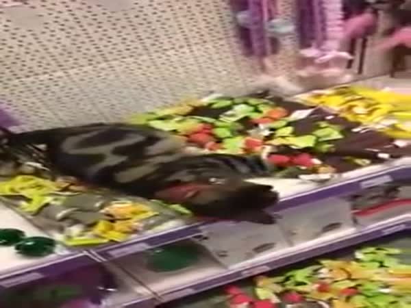 Lost Cat Rolling Around In Catnip Toys In Pet Store