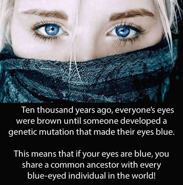 Amazing And Entertaining Facts About Eyes (17 pics)