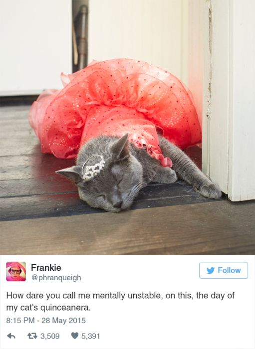 The Funniest Tweets About Cats That The Internet Has To Offer (31 pics)