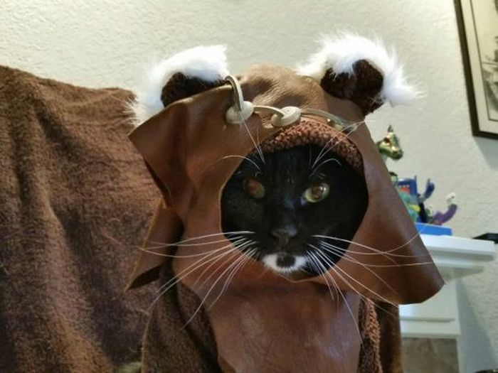 Cats in Cosplay Is The Cutest Thing Ever (14 pics)