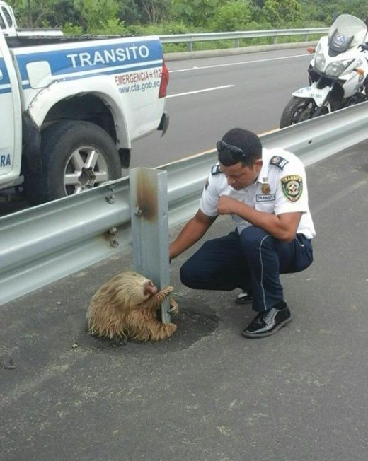 Little Guy Being Rescued After Trying To Cross The Highway In Ecuador (4 pics)