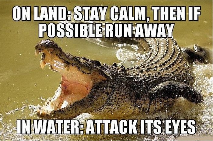 13 Combat Tips To Help You Survive In The Wild (13 pics)
