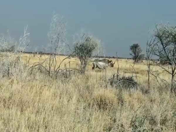 Crazy Rhino Attacks A Car