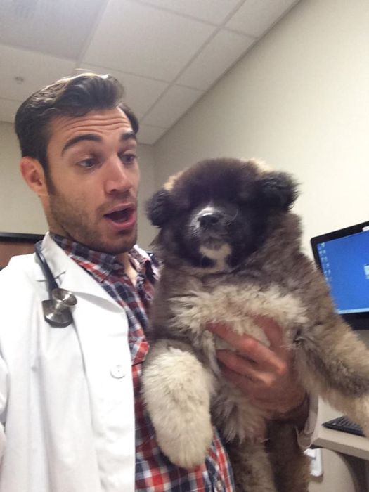 Women Everywhere Are Going Crazy Over This Veterinarian (33 pics)