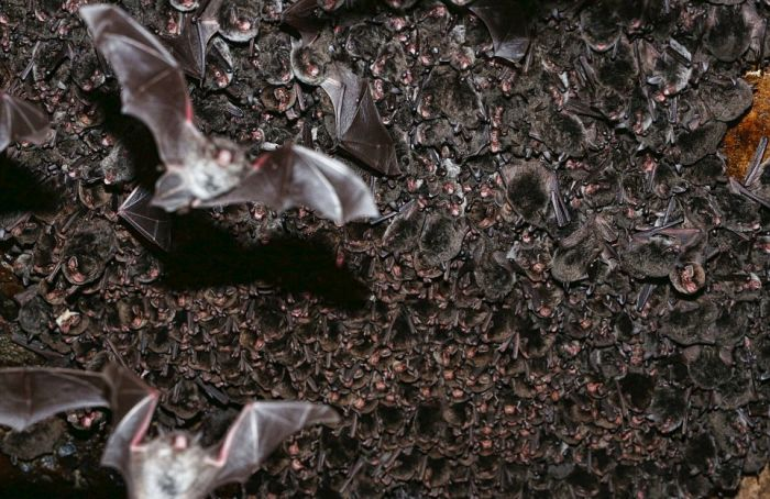 Researchers In Japan Have Solved The Mystery Of The Missing Bats (14 pics)
