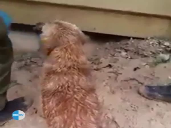 Dog Saves Her Drowning Puppy
