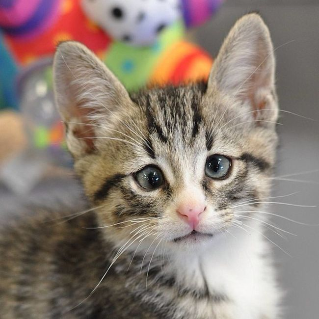 Say Hello To Bum The Cross Eyed Kitten (6 pics)