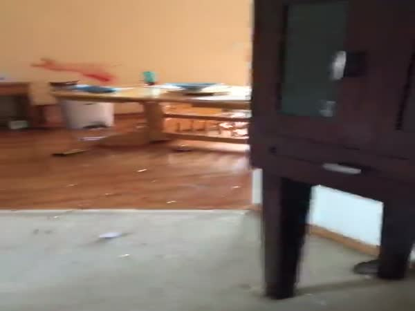 Deer Runs Through House And Stages A Murder Scene