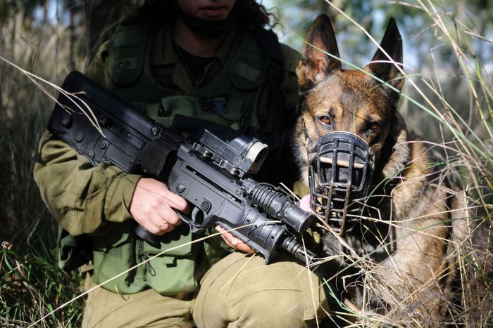 Israeli Army Dogs Are As Tough As They Come (3 pics)