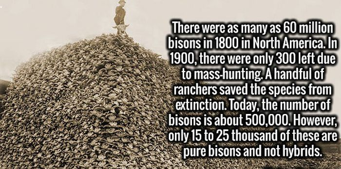 More Cool And Crazy Facts For You For You To Memorize (30 pics)