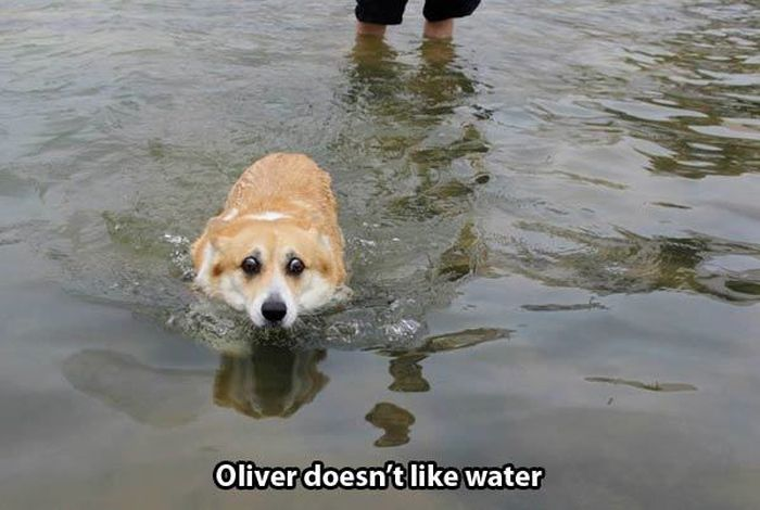 Problems Only Dog People Can Relate To (6 pics)