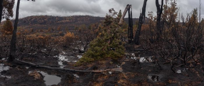 The Island Of Tasmania Has Been Damaged After Fires Burned For A Week (16 pics)