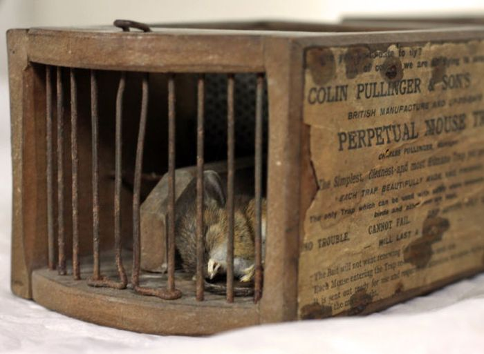 This 155-Year-Old Antique Mouse Trap Is Still Getting The Job Done (3 pics)