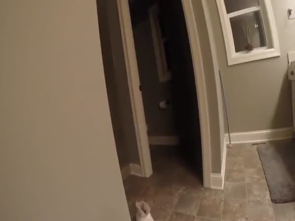 Adorable Game Of Hide N Seek Between Parents And Toddler Wearing A GoPro