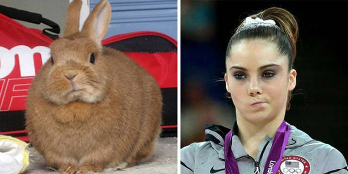 Celebrities Side By Side With Their Animal Doppelgangers (58 pics)