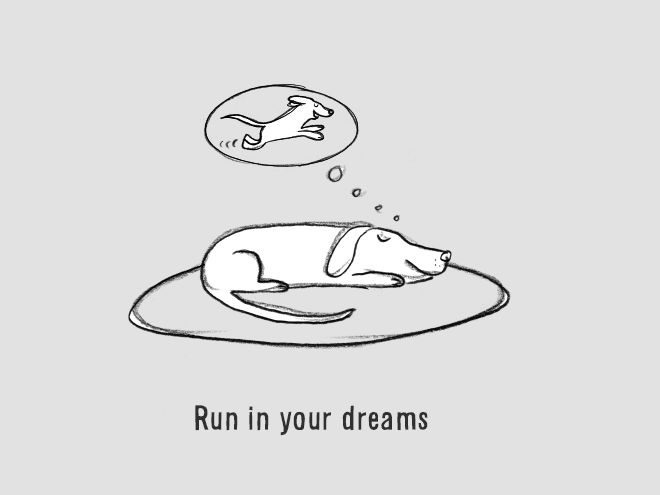 The Ultimate Guide On How To Be A Dog (18 pics)