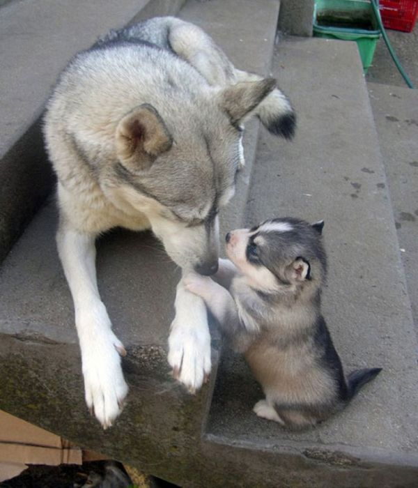 Adorable Animals Who Also Make Awesome Parents (27 pics)