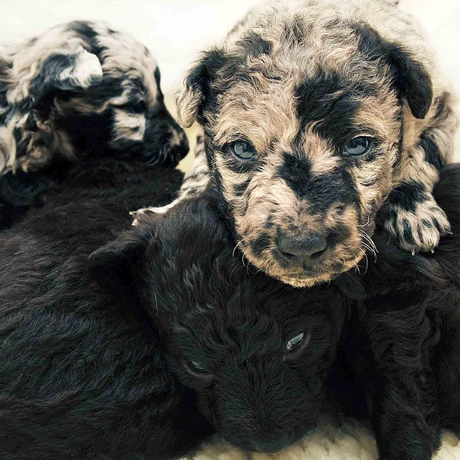 Dogs Look Very Different When They're Only 3 Weeks Old (14 pics)