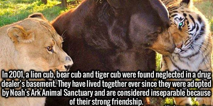Improve Your Memory And Stimulate Your Brain With These Surprising Facts (19 pics)