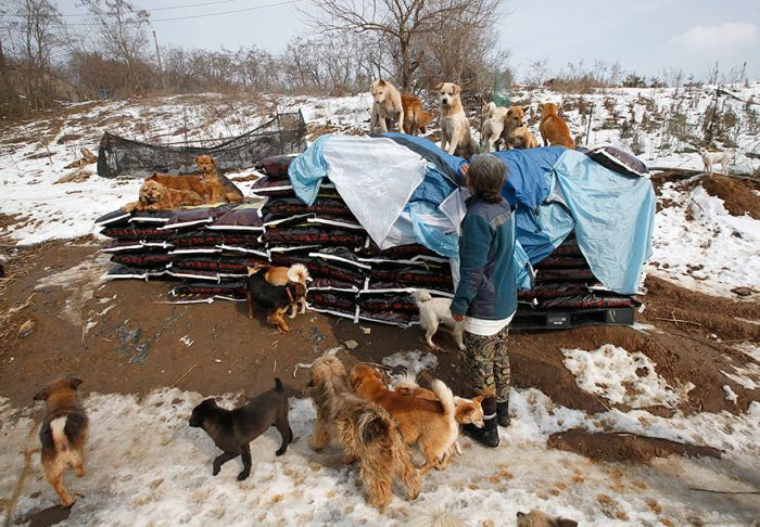 A Woman In South Korea Has Saved Over 200 Dogs (4 pics)